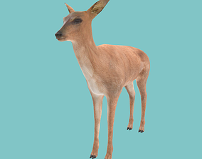 game 3D asset game-ready Low poly deer