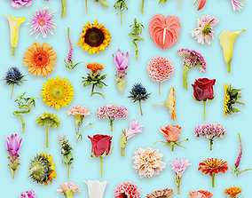 25 Flower Collection 3D asset