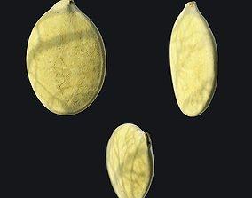 3D model Pumpkin Seed