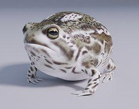 3D asset Desert Rain Frog - Animated