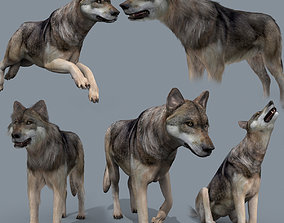 My Wolf - 3d animated wolf model animated