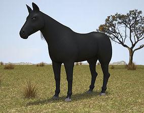 Rocky Mountain Horse 3D