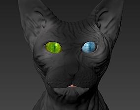 3D model Cat Sphynx