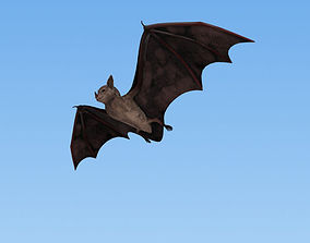 Common Bat 3D