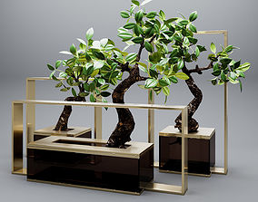 3D Set of mangrove branches in a vases