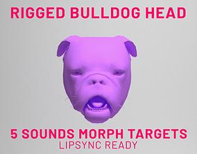Bulldog Head Rigged Lipsync 3D asset