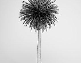 Canary Island Date Palm 3D model
