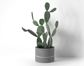 Barbary Fig in Pot 3D