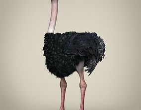 Low Poly Realistic Ostrich 3D model