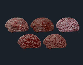 3D 5 Brain Human Organ Game Ready