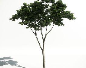 3D Tree 19 amce1