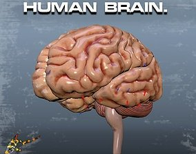 3D animated HUMAN BRAIN