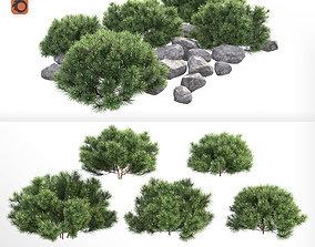 3D model Pinus mugo Pumilio