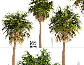 Set of Sabal Palm or Cabbage Palm Trees - 3 Trees 3D model