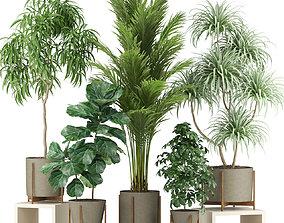 3D Plants collection 343