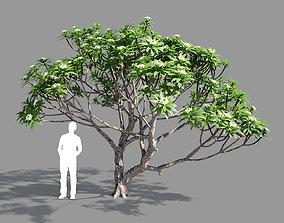 3D Plumeria 2