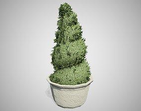 3D model Burford Holly Spiral