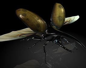 3D asset Insect Collection 12 Halberd beetle