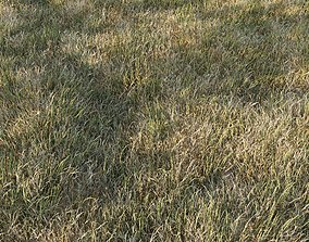 Grass Collection 6 3D model