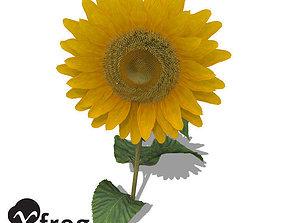 XfrogPlants Sunflower 3D