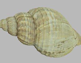 Single seashell photoscan 09 3D model