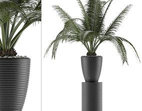 3D model House Plant 29