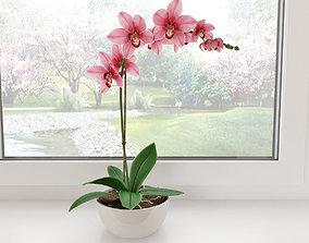 Orchid1 3D model