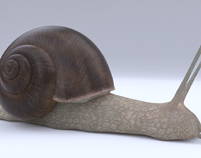 Snail 3D model rigged
