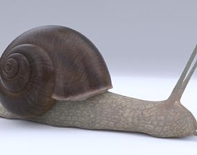Snail 3D model rigged