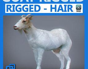3D animal Rigged Goat