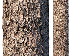 Spruce bark material 3D model forest