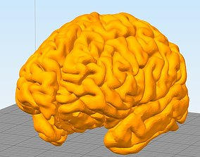 Brain Human Anatomy 3dprint