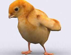 animated 3DRT - Chick