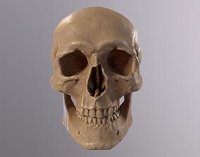 3D asset Low Poly Old Skull