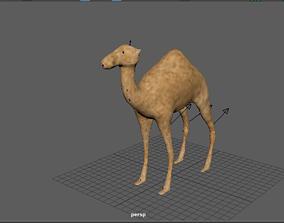 3D Camle model