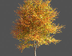 poplar TULIP TREE 1 3D model