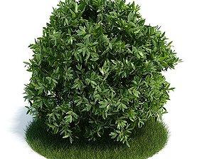3D model Shrub Small Leaves