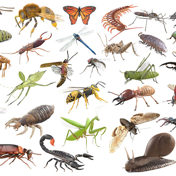30 PBR Realistic Low poly Rigged Insects 3D Model Collection
