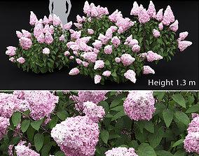 3D model Hydrangea Paniculata Bush 01
