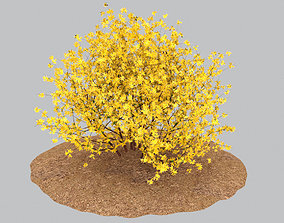 bush 3D model Forsythia