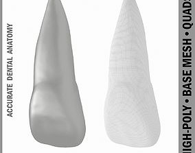3D Human Upper Left Central Incisor Tooth