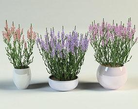 ling heather calluna set in pot 3D model