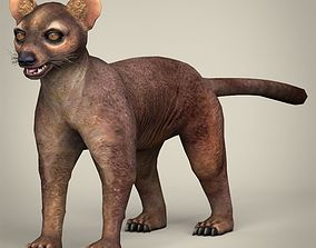 Low Poly Realistic Fossa 3D asset