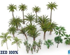3D asset Plam Tree Collection Optimized