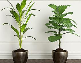 3D model PLANTS 20