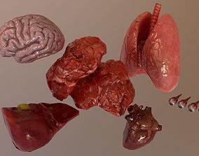 Internal Organs Collection 3D asset