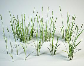 Phleum 10 grass set 3D model