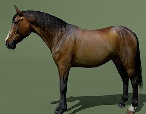 LowPoly Horses 10 colours 3D asset
