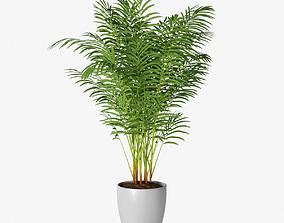 Palm 14 3D model