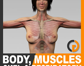 3D Human Female Body Muscular Respiratory System 2